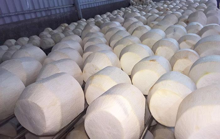 Hướng dẫn thủ tục xuất khẩu dừa tươi