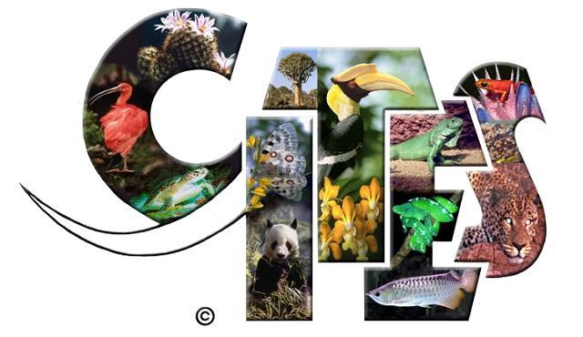 Cần có chứng chỉ của CITES để được thông qua nguồn gốc của trầm hương