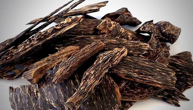 Số lượng trầm hương đang giảm xuống nghiêm trọng do vấn đề về phá rừng